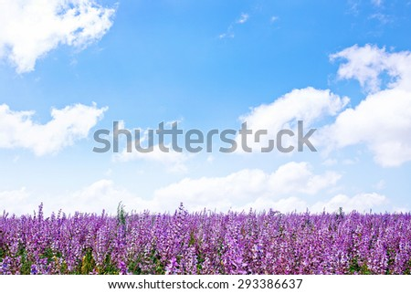 flowers in field - stock photo