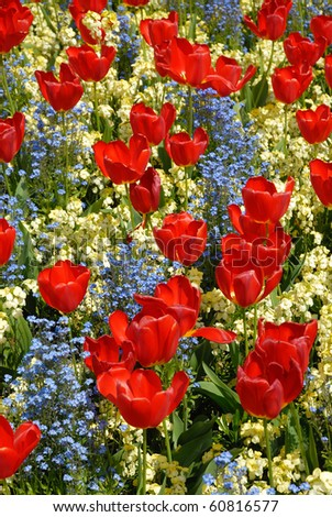 Flowers in front of Buckingham palace - stock photo