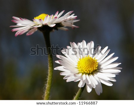 Flowers in Love - stock photo