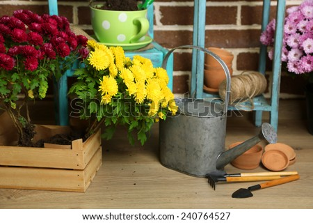 Flowers in pot on chair, potting soil, watering can and plants on floor on bricks background. Planting flowers concept - stock photo