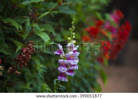 Flowers in pots in Italian . - stock photo