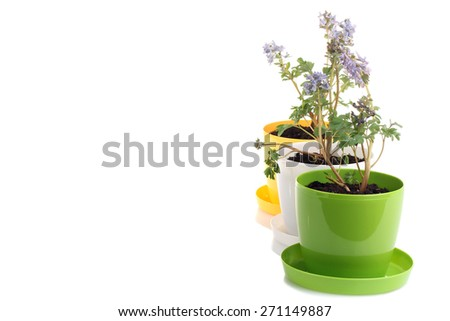 flowers in pots isolated - stock photo