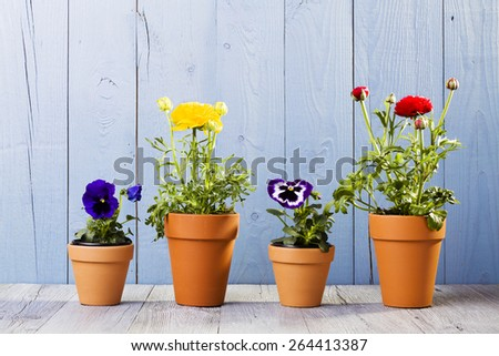 Flowers in pots ready for transplanting - stock photo