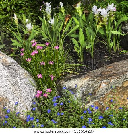 flowers in rock garden - stock photo