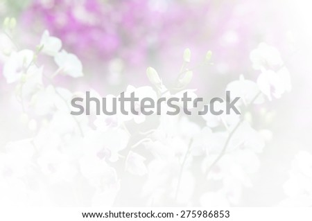 flowers in soft color made blur style for background - stock photo