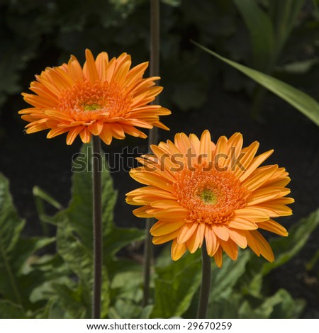 Flowers in spring, vibrant colors - stock photo