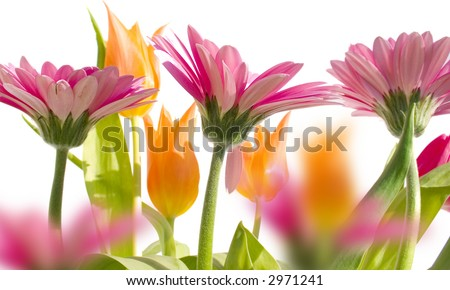 Flowers in spring with white background - stock photo