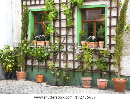 Flowers in terracotta pots - garden before a house - entrance. - stock photo
