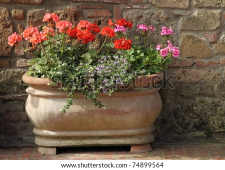 flowers in terracotta vintage pot, Tuscany - stock photo