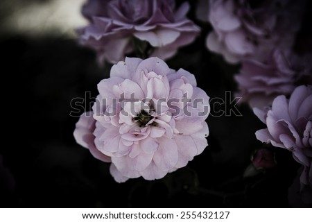 Flowers in the design of natural dark tones. - stock photo