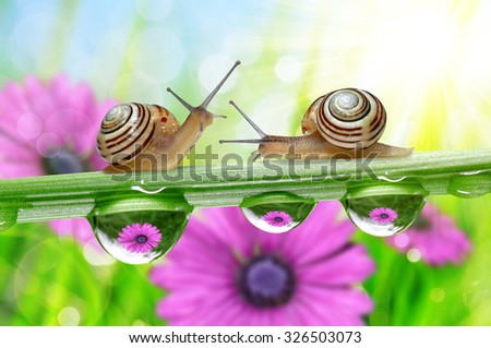 Flowers in the drops of dew on the green grass and snails. Nature background. - stock photo
