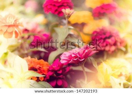 flowers in the garden with light leaks effect - stock photo