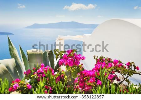 Flowers in the garden with sea view, selective focus. Santorini island, Greece.  - stock photo