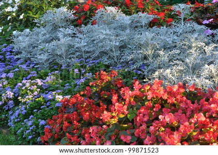 Flowers in the gardens along the way. - stock photo
