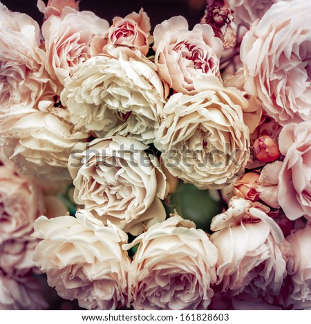Flowers  - many blooming roses bunched together on a rose bush. - stock photo