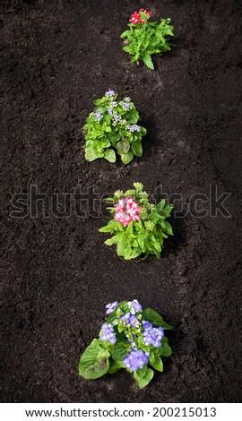 Flowers o the black ground - stock photo