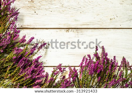 Flowers of heather in purple color from forest arranged on rustic wood background. Flowers background useful as greeting card, postcard or floral decorative background. - stock photo