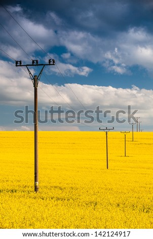 Flowers of oil in rapeseed field with high voltage power lines - stock photo