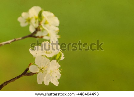 Flowers of the cherry blossoms on a spring day grunge vintage toned - stock photo