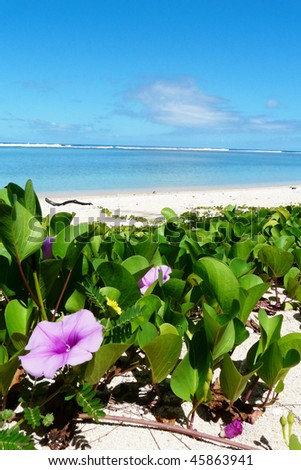 Flowers on a beach in Reunion island - stock photo