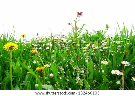 Flowers on a field against an isolated background - stock photo