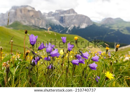 Flowers on meadows above Val di Fassa, Dolomites, Italy - stock photo