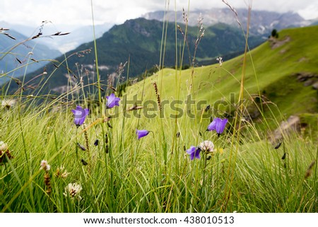Flowers on meadows, Val di Fassa, Dolomites, Italy - stock photo