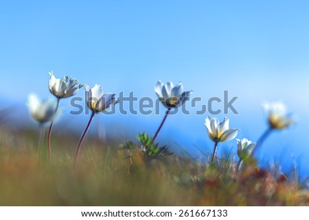 flowers on spring lawn closeup - stock photo