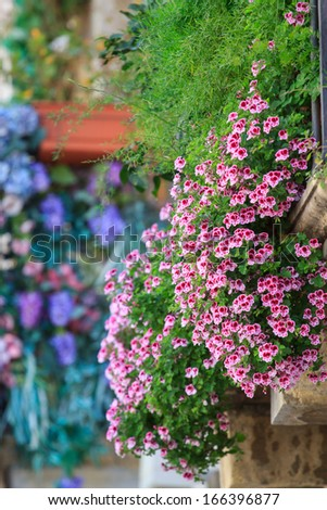 Flowers on the balcony - stock photo