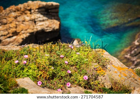 Flowers on the edge of the cliff with the background of the clear blue sea - all is perfectly illuminated and noise is completely absent, focus is on the grass. - stock photo