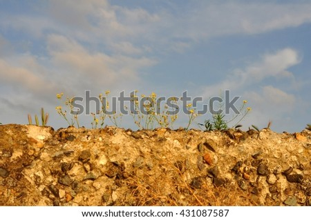 flowers on the stones - stock photo