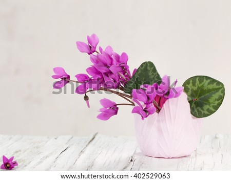 flowers on white background - stock photo