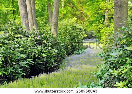 flowers path and green forest in  spring time - stock photo