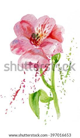 Flowers pink alstromeries 2, watercolor - stock photo
