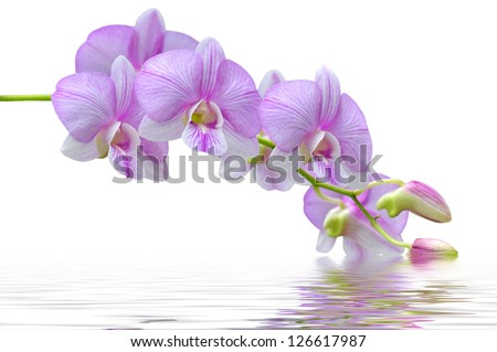 flowers pink orchids in water - stock photo