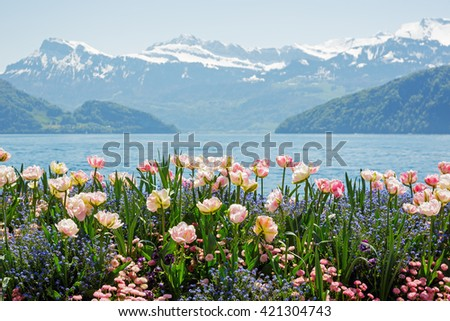 Flowers shown on the background of the Alps by the Lake Lucerne in Weggis - stock photo