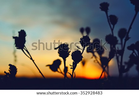 flowers silhouette at colorful sunset sky - stock photo