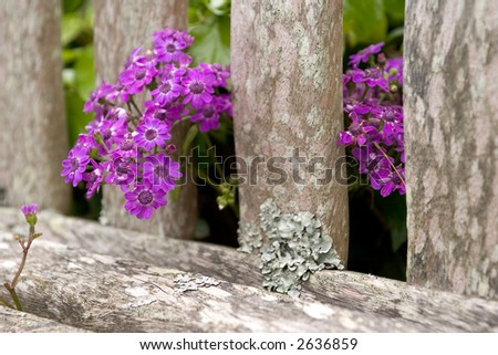 Flowers through a bench - stock photo