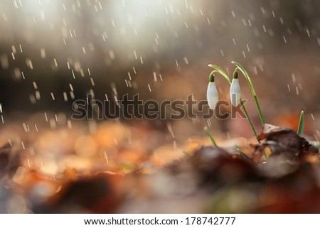 Flowers under the sweet rain, natural backgrounds  - stock photo