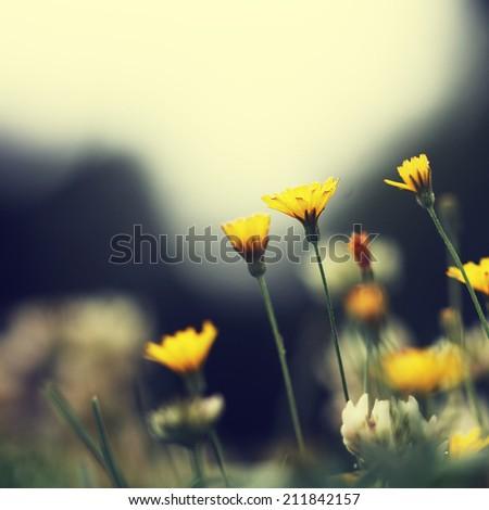 flowers vintage background - stock photo