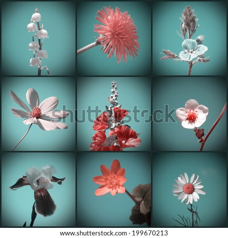 Flowers. Vintage floral collage. Retro style. - stock photo