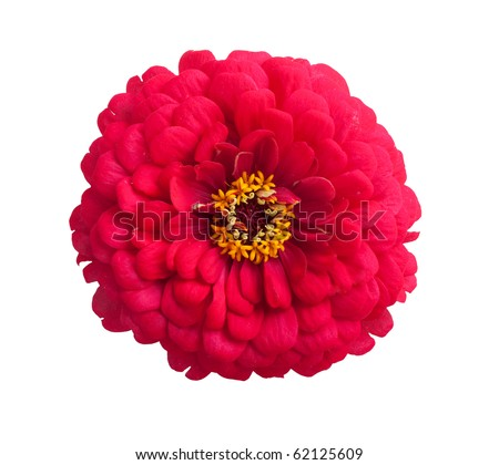 Flowers with petals isolated on white background - stock photo