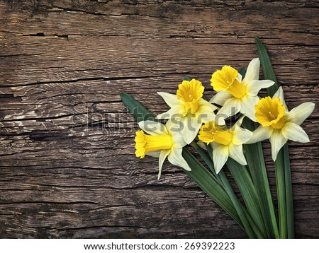 Flowers yellow daffodils on a wooden vintage background - stock photo