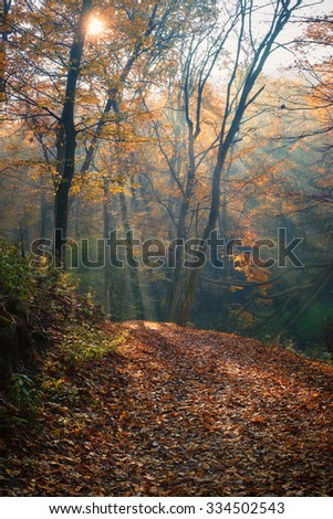 Flowing stream on colorful autumn forest path - stock photo