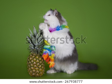 fluffy cat and fruits isolated on a green background - stock photo