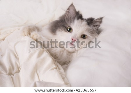 fluffy cat dozing in bed - stock photo