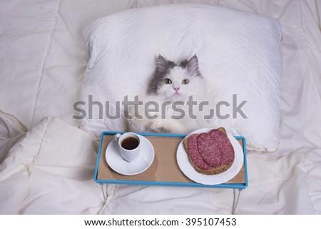 fluffy cat got breakfast in bed - stock photo
