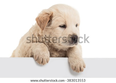 Fluffy Chow-chow puppy, isolated - stock photo