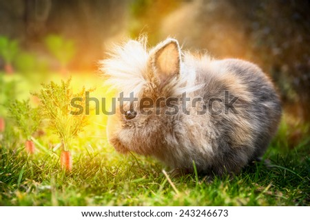 fluffy Easter bunny on sunny meadow with carrots in garden - stock photo