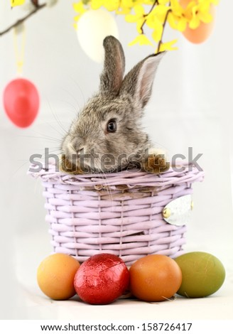 Fluffy gray rabbit in basket with Easter eggs isolated on white - stock photo